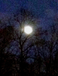 Full Moon in Potomac by Donna Reed Judkins